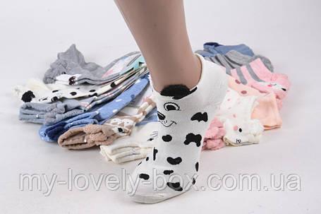ОПТОМ.Женские носки Мордочки (SL006)   12 пар, фото 2