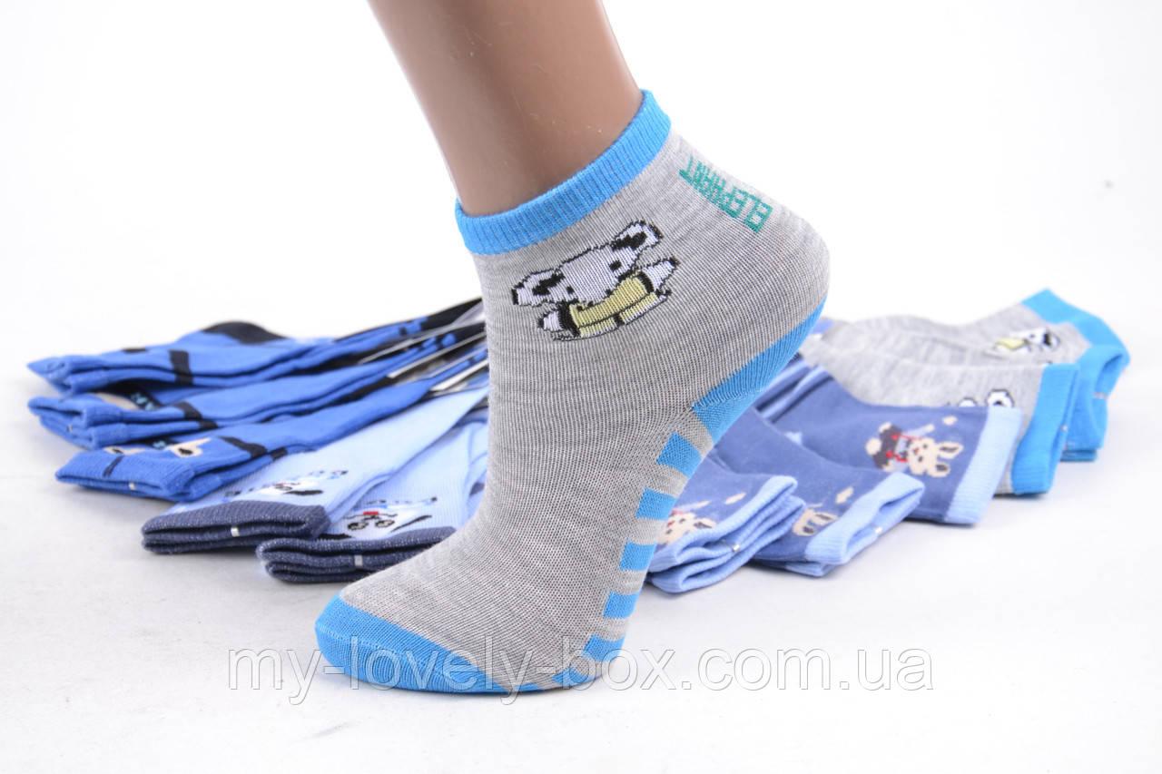 ОПТОМ.Детские носки на мальчика р.17-21 (LC235/XS)   12 пар