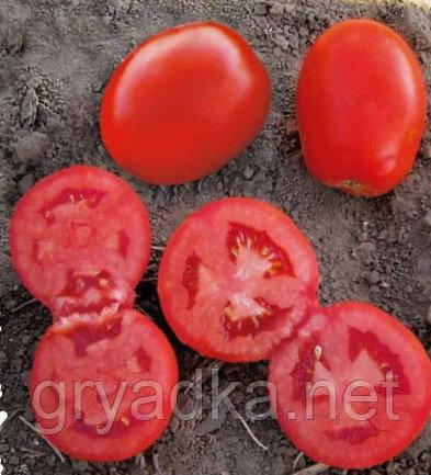Томат 1509 F1 Lark Seeds 500 семян