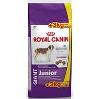 Роял Канин Джайнт ЮниорRoyal Canin Giant Junior сухой корм для щенков гигантских собак 15 кг+ 3 кг
