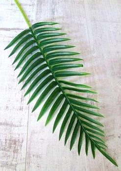 Лист латексный 105 см, Пальма