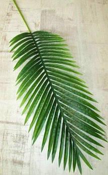 Лист латексный 120 см, Пальма