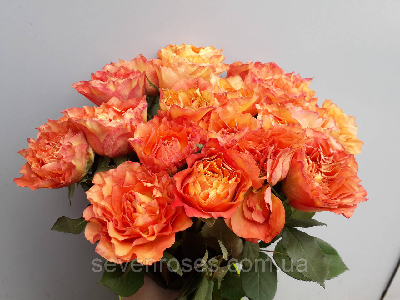 Букет из 21 огненой розы 60см.