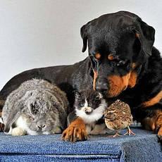 Товары для домашних животных и птиц, общее