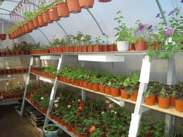 Теплица из поликарбоната для выращивания цветов