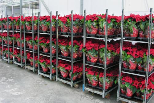 Особенности выращивания отдельных сортов цветов