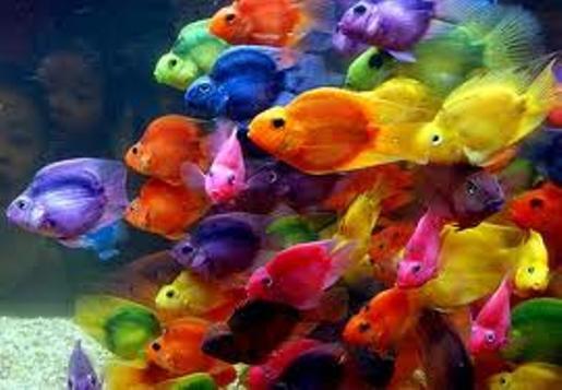 Корми для посилення забарвлення риб