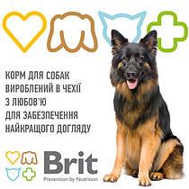 Brit (Czech Republic) /Брит (Чехия)
