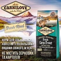 Carnilove (Czech Republic) / Карнилов (Чехия)