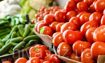 Здоровий врожай огірків та томатів на столі