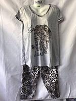 Пижама женская, БАТАЛ (50-58) оптом купить от склада 7 км Одесса