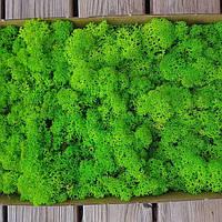 Стабілізований мох (ягель) 500 г