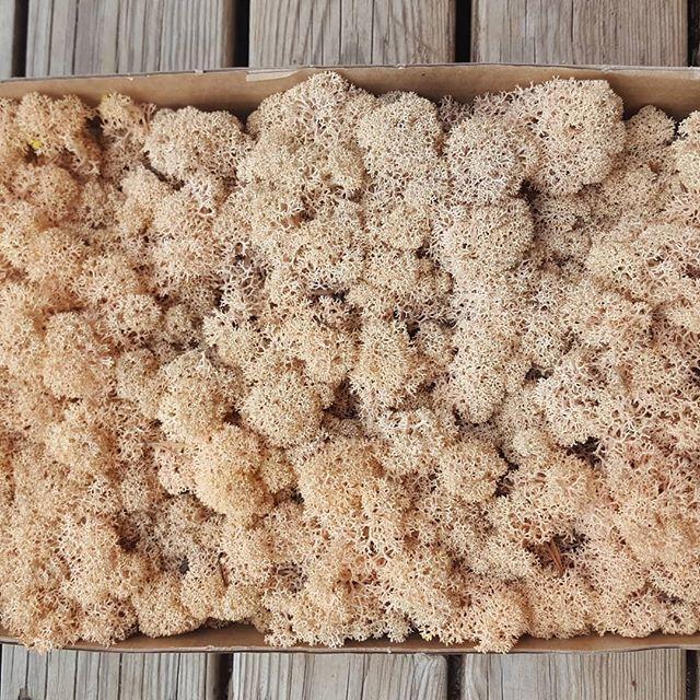 Стабілізований мох (ягель) 500 г фасування