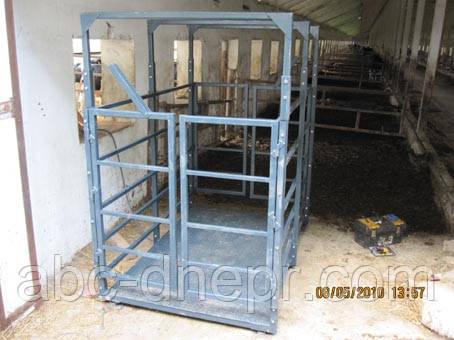 Весы скотские для телят, коров