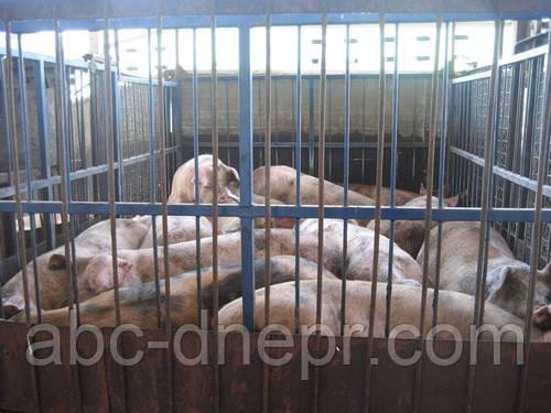 Весы для животных механические 6 метров 10 тонн
