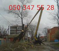 Валка деревьев, удаление веток, выкорчевывание пней Донецк