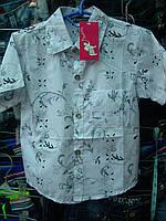Рубашка детская мальчик r53282622