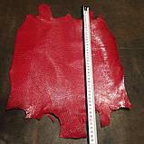 Шкіра ігуани червона, фото 5