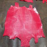 Шкіра ігуани червона, фото 4