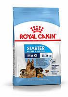 Сухий корм  Royal Canin MAXI Starter для цуценят до 2 місяців, вагітним і годуючим сукам великих порід