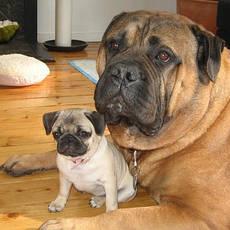 Собаки, цуценята