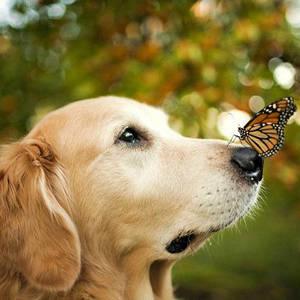 домашні тварини та комахи