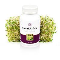 Корал Люцерна Alfalfa, 200 таблеток  Витамины   Минералы Незаменимые аминокислоты Мочегонное  Почки