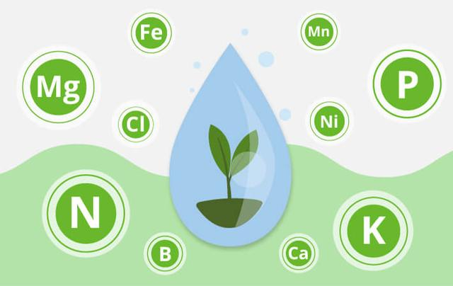 Значение макро и микро элементов для растений