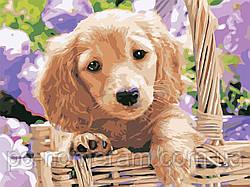 Картина по номерам Пёсик в корзинке (AS0595) 30 х 40 см ArtStory [Без коробки]