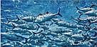 Омега-3,Натуральный рыбий жир для сосудов Япония (ДНА Омега-3), фото 4