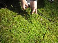 Почему зеленеет земля в теплице. Способы борьбы с данной проблемой