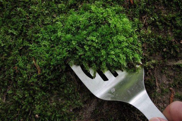 Как избавится от водорослей и мха в теплице