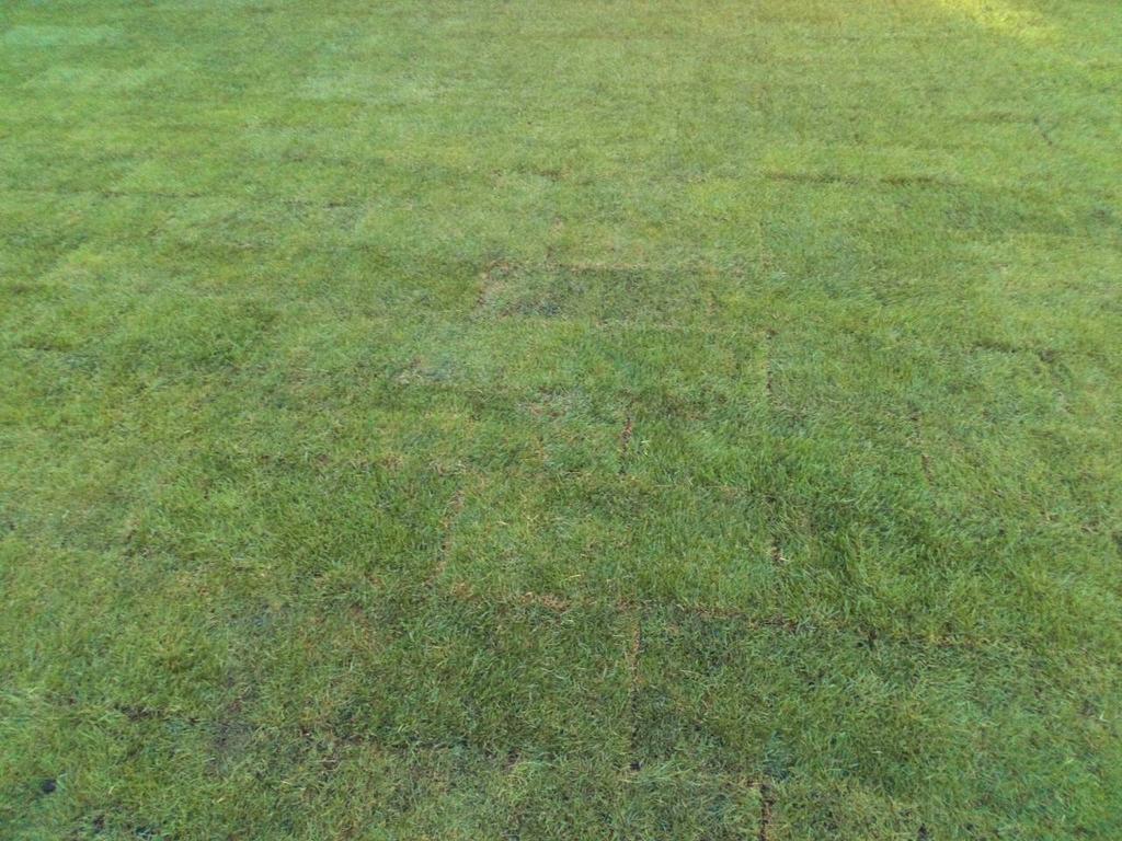 Автоматический полив и рулонный газон 250 м2 на Осокорках  -1