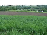 Продается земельный участок   0,32 га под застройку