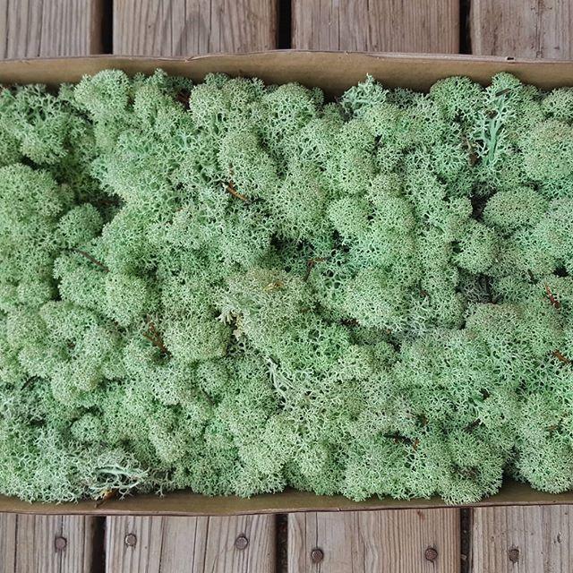 Стабілізований мох (ягель) 1 кг