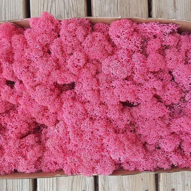 Стабілізований мох 1 кг