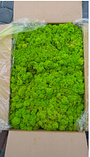 Мох ягель стабілізований зелений  500 г упаковка, фото 3