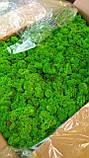 Мох ягель стабілізований зелений  500 г упаковка, фото 4