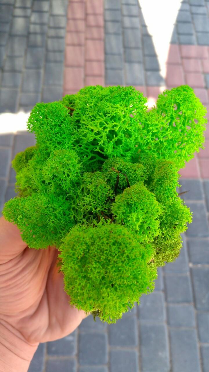 Мох ягель стабілізований зелений  500 г упаковка