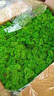 Стабілізований мох 1 кг фасування