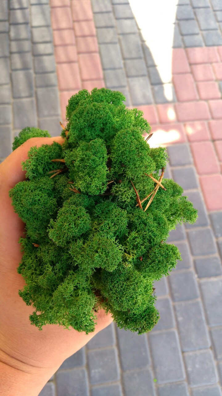 Мох ягель зелений  для декору опт 25 кг
