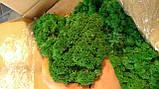 Лишайник ягель зелений для декору опт 25 кг, фото 3