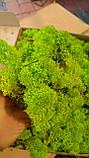 Стабілізований Мох (ягель) світло-зелений 1 кг, фото 3