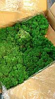 Стабілізований мох 1 кг, фото 1