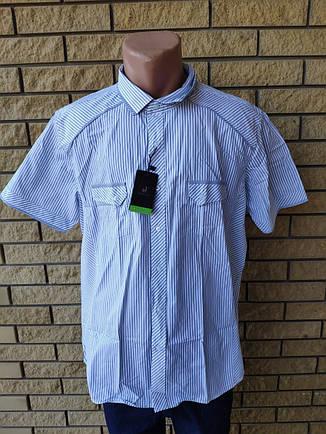 Рубашка мужская летняя коттоновая брендовая высокого качества DISIBELL, Турция, фото 2