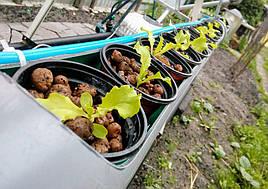 Зелень в фитопирамиде на удобрениях Green Kit 1