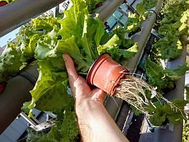 Зелень в фитопирамиде на удобрениях Green Kit 4