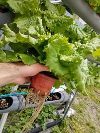 Зелень в фитопирамиде на удобрениях Green Kit 6