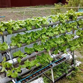 Зелень в фитопирамиде на удобрениях Green Kit 7