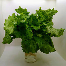 Зелень в фитопирамиде на удобрениях Green Kit 8